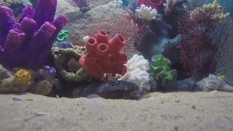 shark aquarium_1533183370765.JPG.jpg