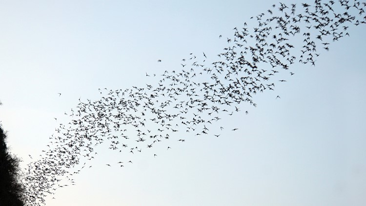Bats and other animals that didn't freeze to death during Texas winter storm are now starving