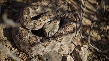 More than 100 snakes found in San Antonio home