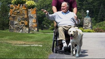 What's next for George H.W. Bush's dog Sully?