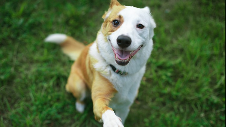 Humane Society of Central Texas waiving adoption fees through Aug. 21