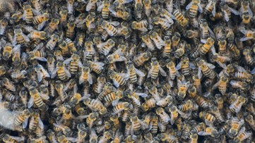 Retoma Park in Robinson reopens after beehive removal