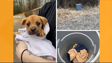 Puppy found in trash can held shut with bungee cords behind an Illinois Walmart