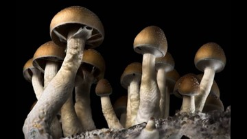 In close race, Denver becomes first city in the U.S. to decriminalize 'magic mushrooms'
