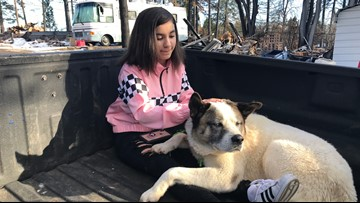 'He's a true survivor' | Dog reunited with family 101 days after Camp Fire