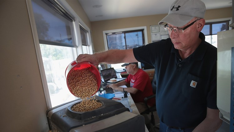 Greg Lovins checks the quality of a load of soybeans being delivered to a Ruff Bros. Grain elevator on June 13, 2018 in Blackstone, Illinois.