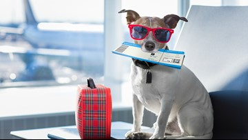 Animals on airline flights? DOT flooded with comments