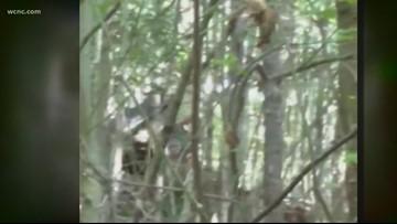 North Carolina man claims he spotted three Bigfoots