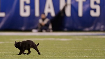 Black cat escapes onto MetLife Stadium field during Cowboys-Giants Monday Night Football game