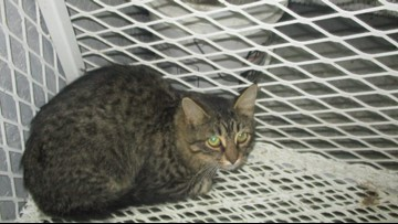 Euthanasia date canceled for more than 40 animals at Ky. shelter